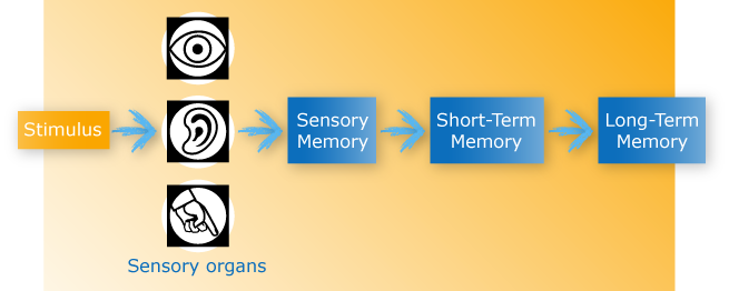 Short Term And Long Term Memory : Short and long term memory